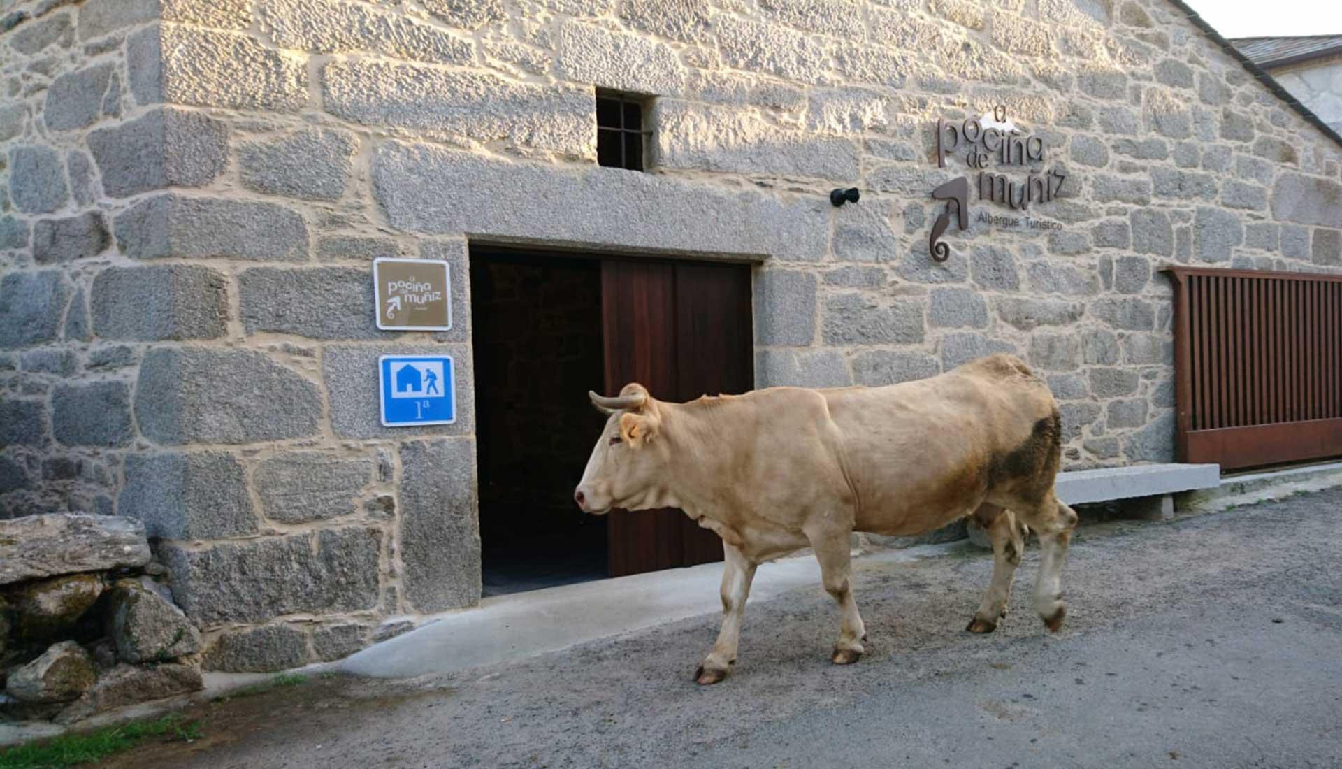 A Pociña de Muñiz. Albergue Turístico.